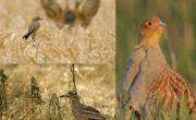 « Natura 2000 » un réseau qui mérite d'être connu !