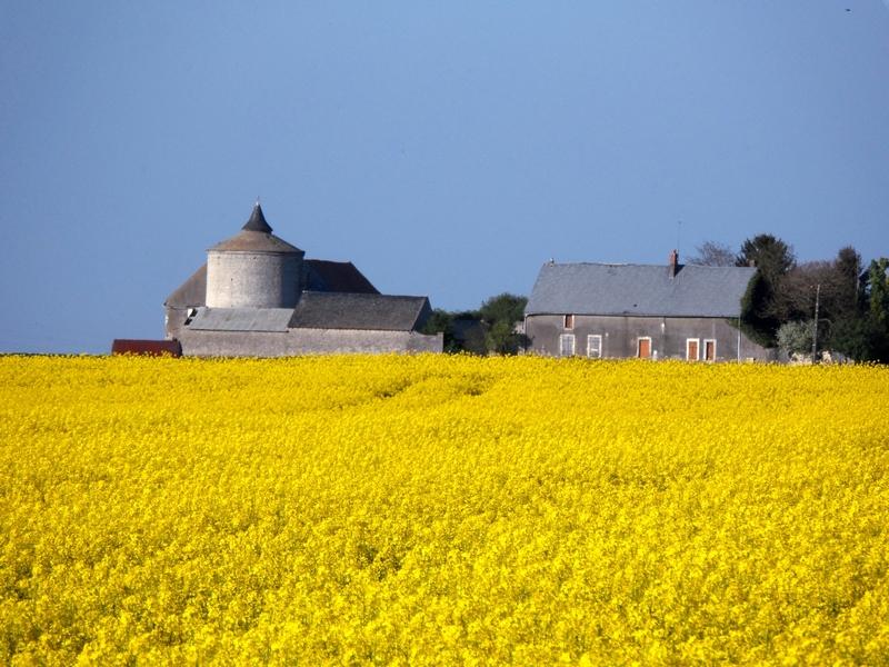 SaintPéravylaColombe1_Le Mesnil